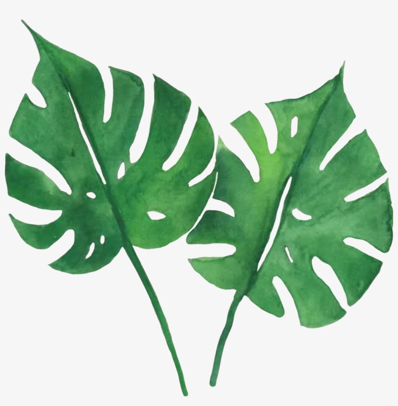 Green Leaves Sticker By Anna Tropical Green Leaves Printable Transparent Png 884x861 Free Download On Nicepng Our favorite large leaf tropical plants. green leaves sticker by anna tropical