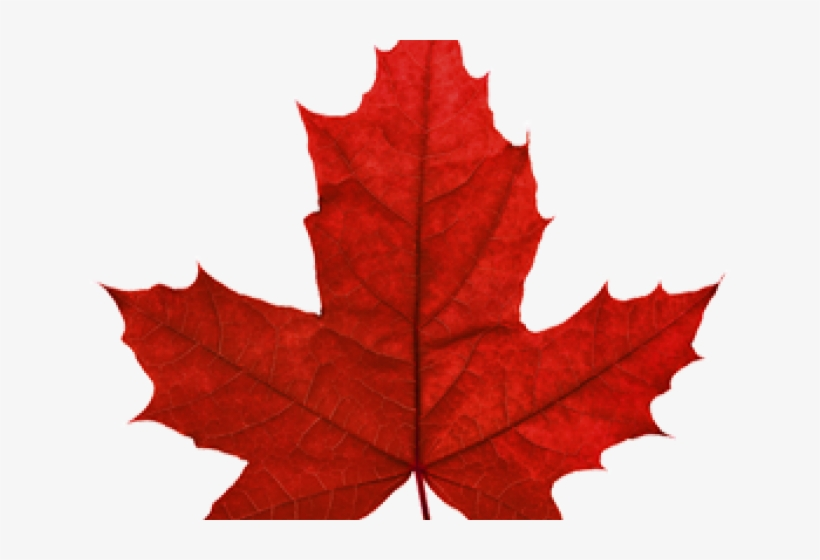 Canada Maple Leaf Png Transparent Images Canadian Maple