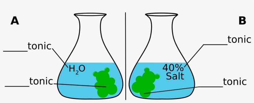 Gummybear-osmosis - Gummy Bear In Salt Water Diagram ... on