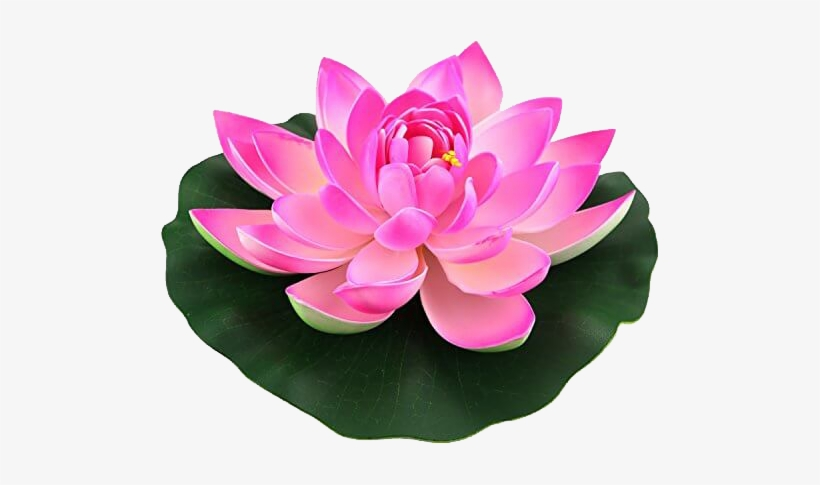 Lotus Flower Transparent Png 500x500 Free Download On Nicepng