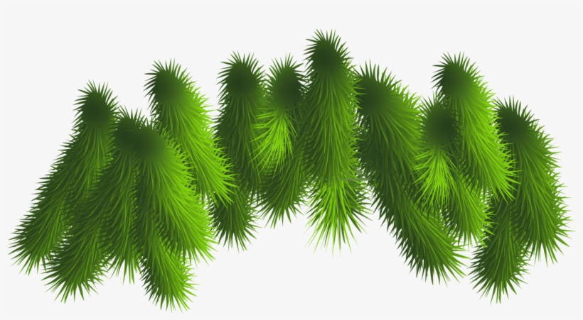 Fir Cone transparent background PNG cliparts free download | HiClipart