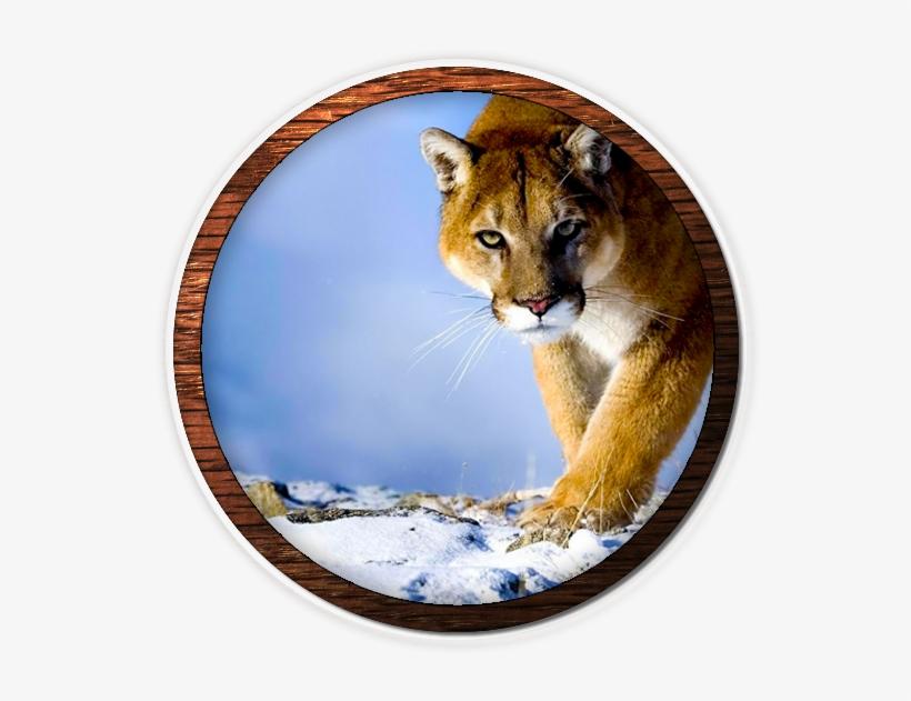 Mountain Lion Fvwd Desktop Wallpaper Hd 1080p Transparent Png