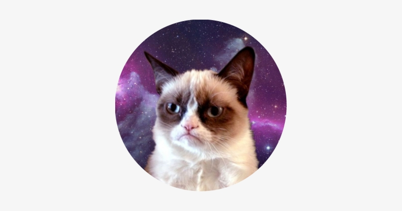 Grumpy Cat Is So Cute That I Can T Help Myself Making Funny Cat