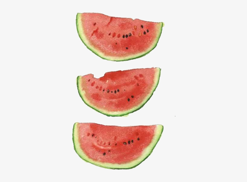 Watercolor Watermelon Png Watermelon Watercolor Png Transparent Png 462x625 Free Download On Nicepng Here you can explore hq watermelon transparent illustrations, icons and clipart with filter setting like size, type, color etc. watermelon watercolor png transparent