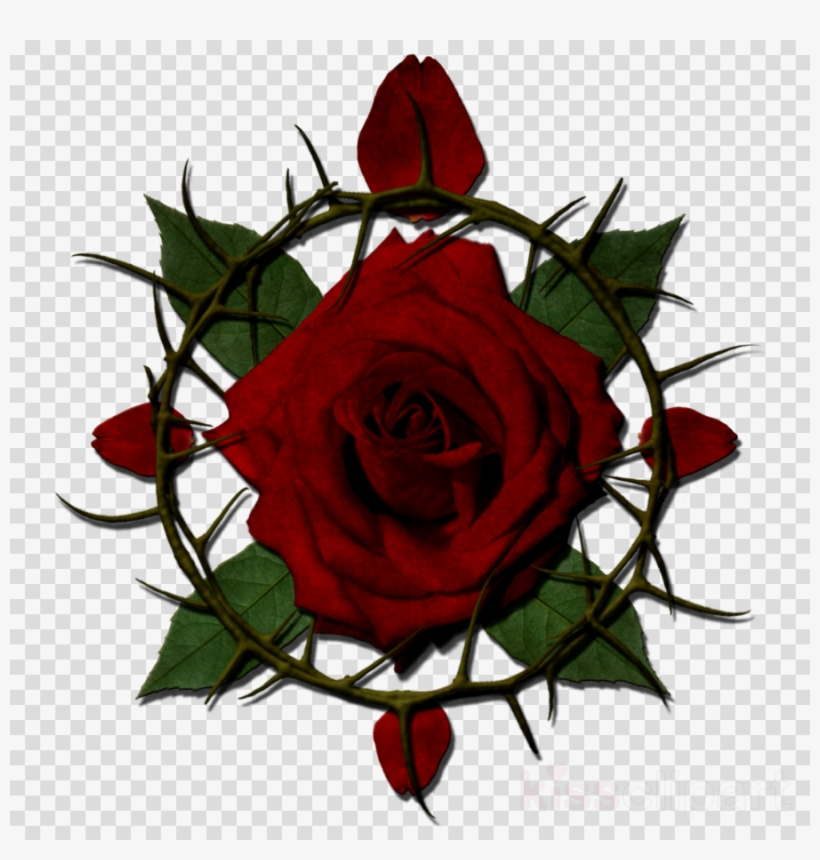 Rose Thorn Clipart