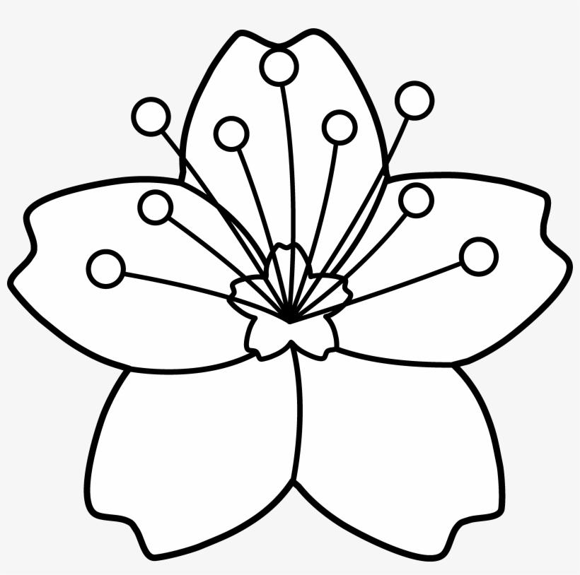 Cherry Blossom Line Art Flower Cartoon Images Black And White