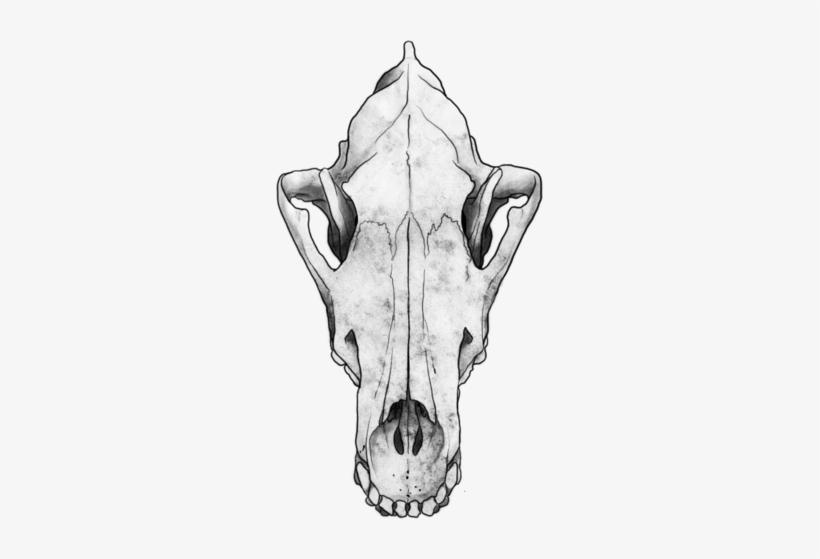 Skull Tattoo Design - Wolf Skull Png Transparent PNG