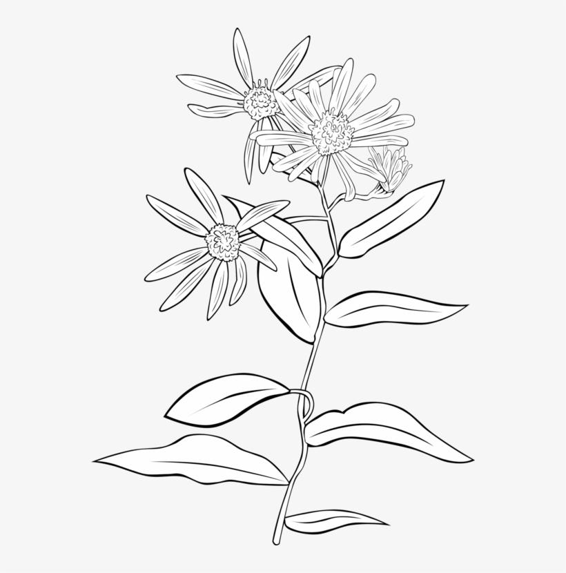 Plant Cell Shrub Botany