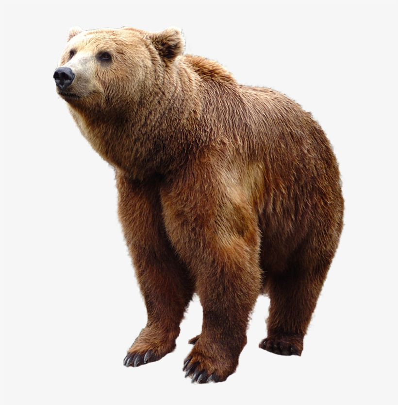 Grizzly Bear Standing Png Image Grizzly Bear Bear Png Transparent Png 620x752 Free Download On Nicepng Discover and download free bear png images on pngitem. grizzly bear standing png image