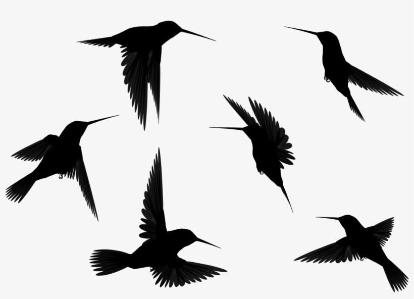 Bird In Flight Silhouette Hd Desktop Wallpaper, Instagram - Birds