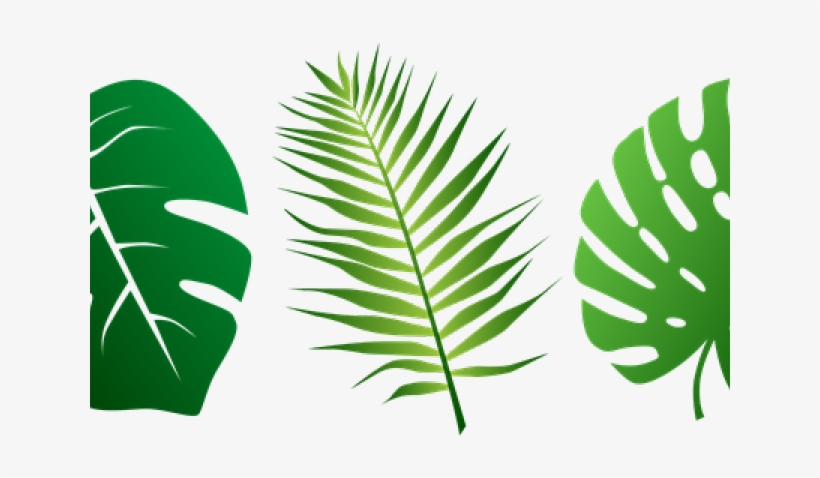 Svg Tropical Leaf Transparent Png 640x480 Free Download On Nicepng All contents are released under creative commons cc0. svg tropical leaf transparent png