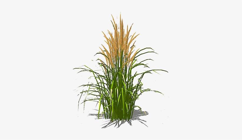 Feather-grass - Grass Texture Single Transparent Transparent