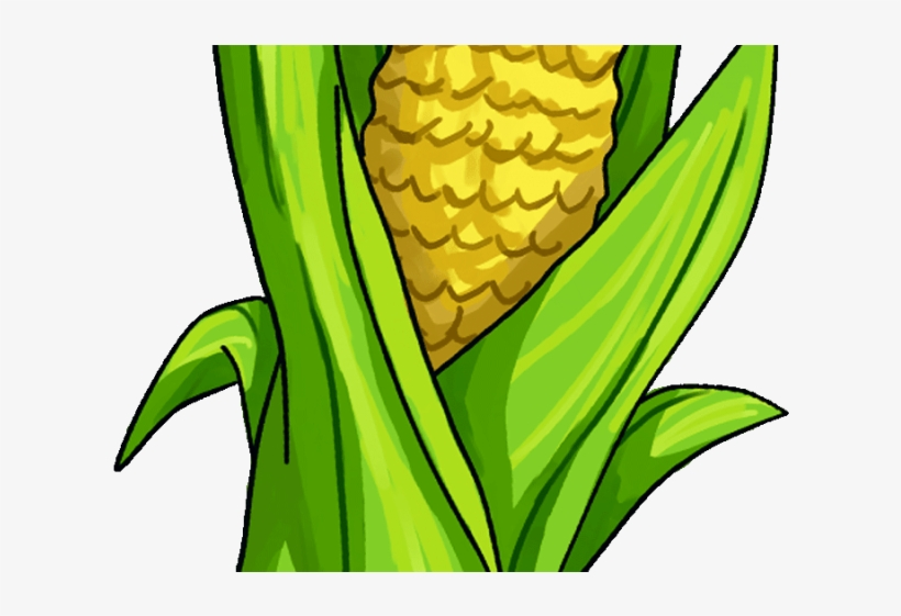 Boiled Corn On The Cob, Corn, Corn Clipart, Boiled Corn PNG Transparent  Clipart Image and PSD File for Free Download