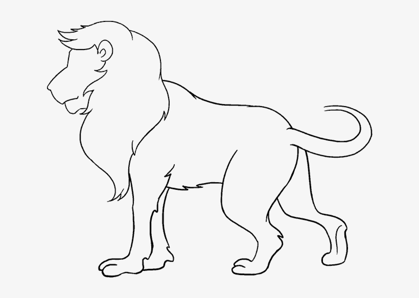 How To Draw Lion Lion Drawing Images Easy Transparent Png 678x600 Free Download On Nicepng