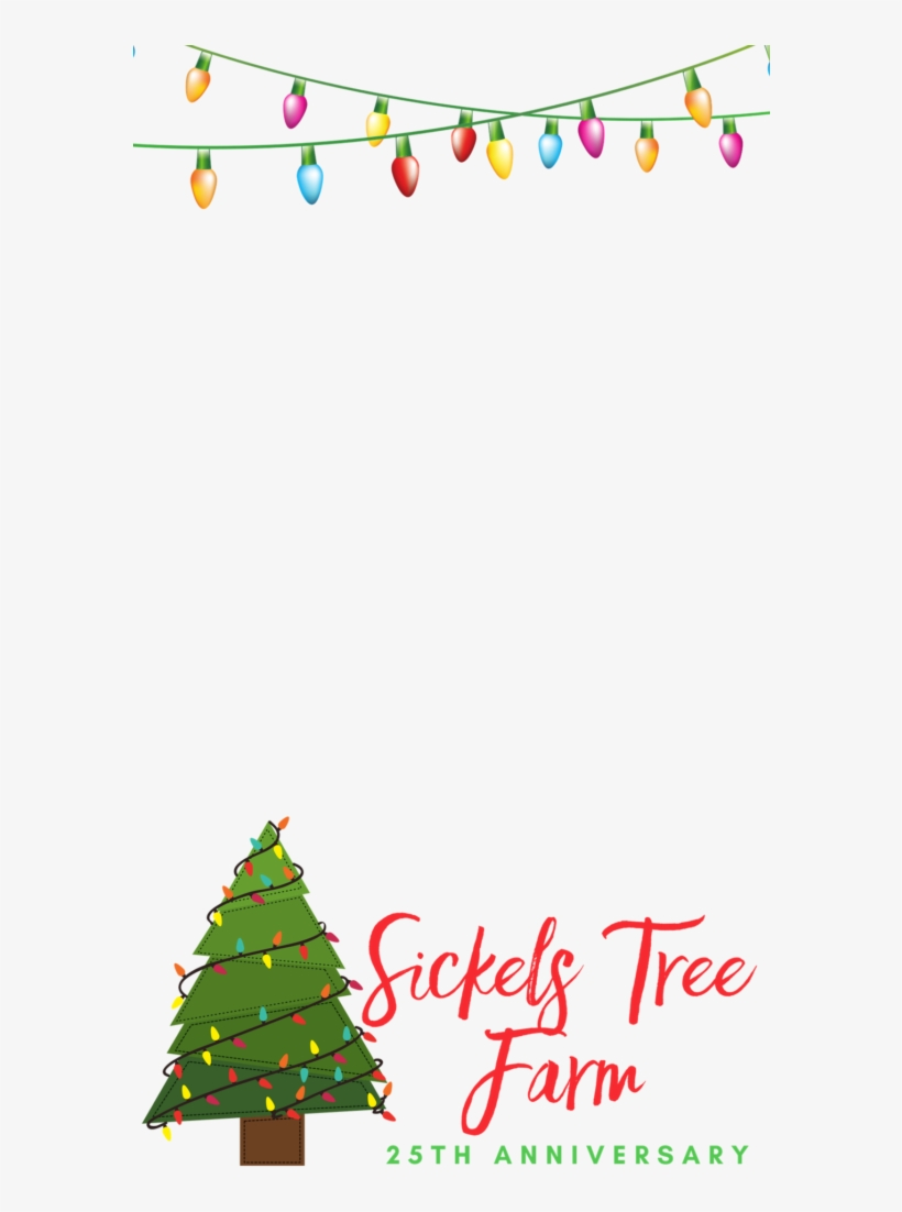 Sickels Tree Farm Indiana Christmas Tree Transparent Png 579x1030 Free Download On Nicepng