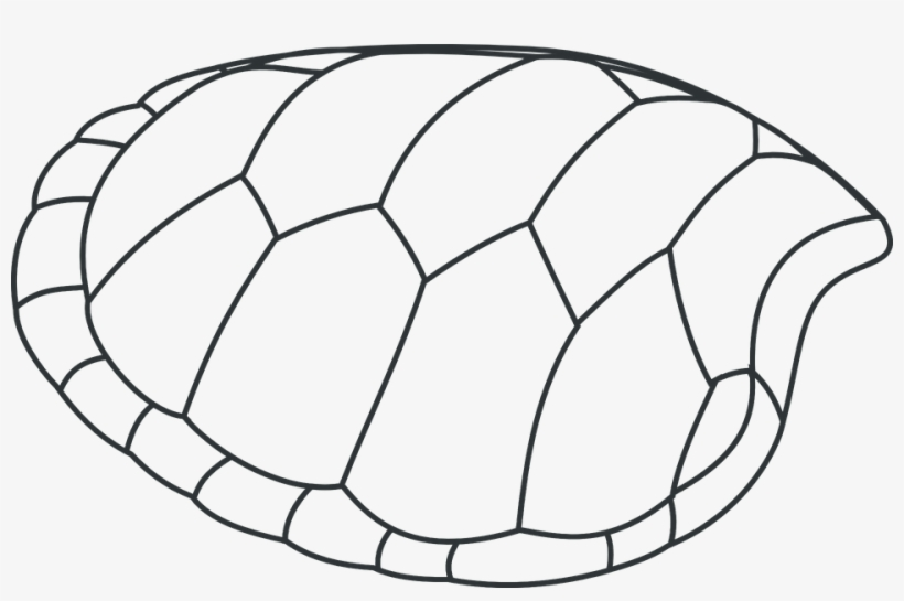 Turtle Shell Png Draw A Turtle Shell Transparent Png 960x592