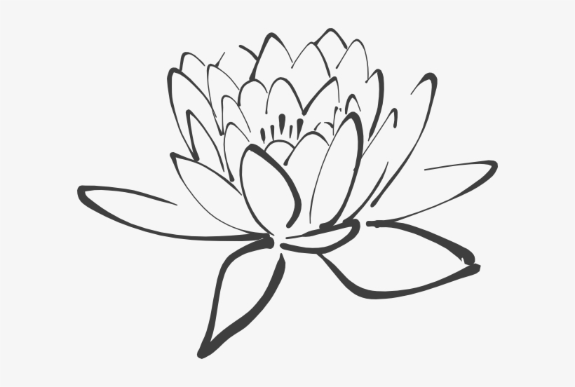 Lotus Flower Outline Black And White Lotus Clipart Transparent Png