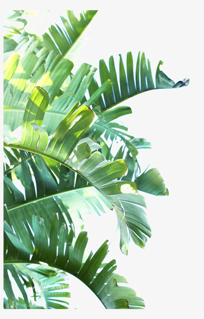 Green Leaf Png Clipart - Tropical Leaves Png Transparent PNG