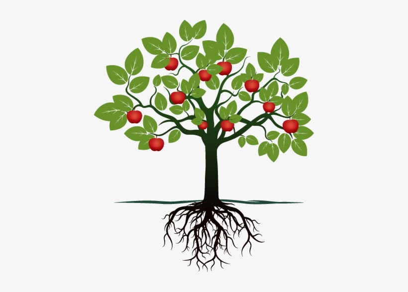Apple Tree Cartoon Png Tree Vector Transparent Png 443x507 Free Download On Nicepng Cartoon tree transparent images (6,688). apple tree cartoon png tree vector