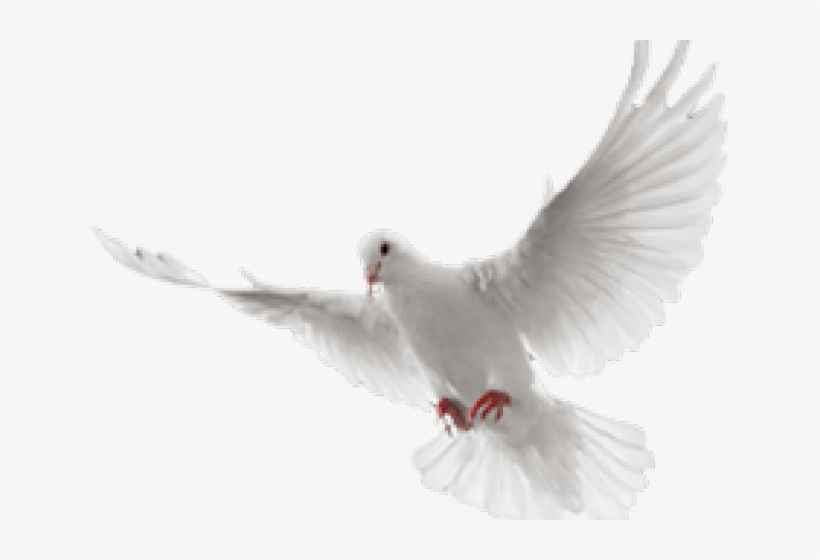 White Dove Clipart In Flight White Flying Dove Png Transparent Png 640x480 Free Download On Nicepng Are you searching for dove png images or vector? white flying dove png transparent png