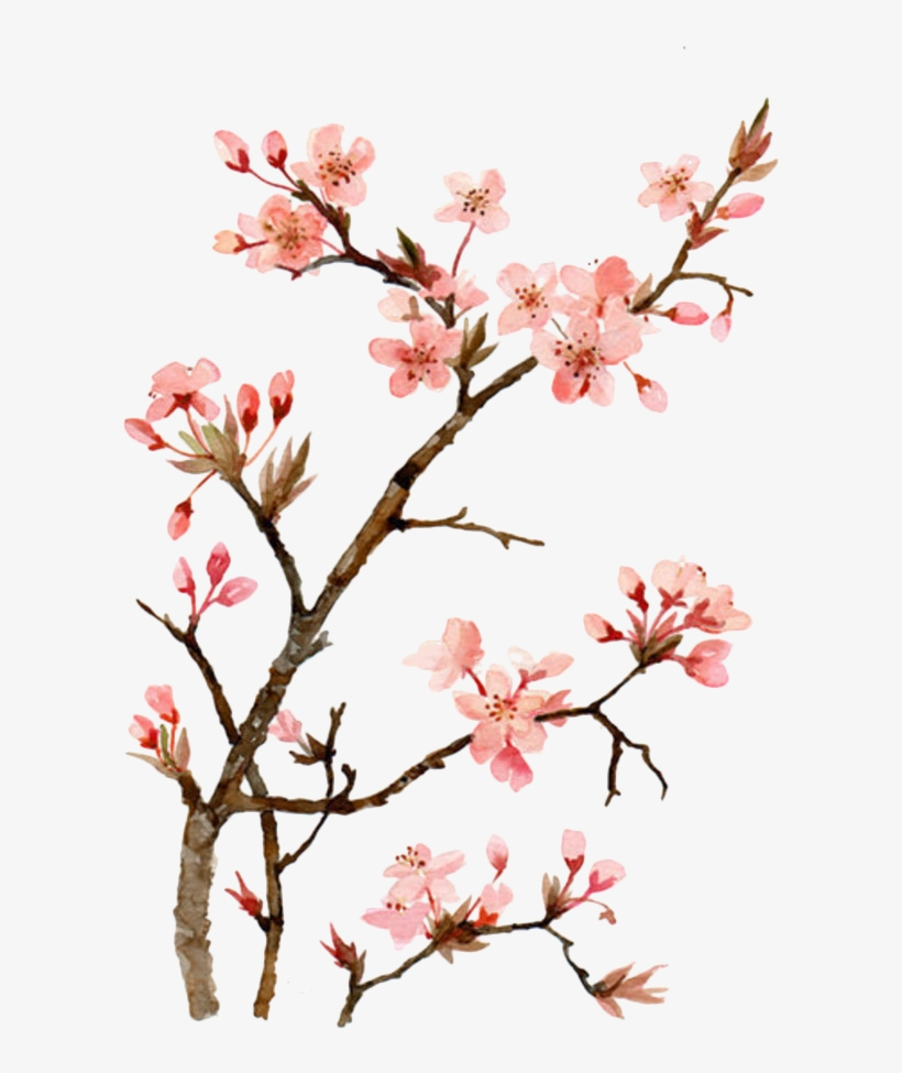 Google Image Result For Https Www Nicepng Com Png Detail 82 820198 Twig Drawing Ch In 2020 Cherry Blossom Painting Cherry Blossom Painting Acrylic Cherry Blossom Art