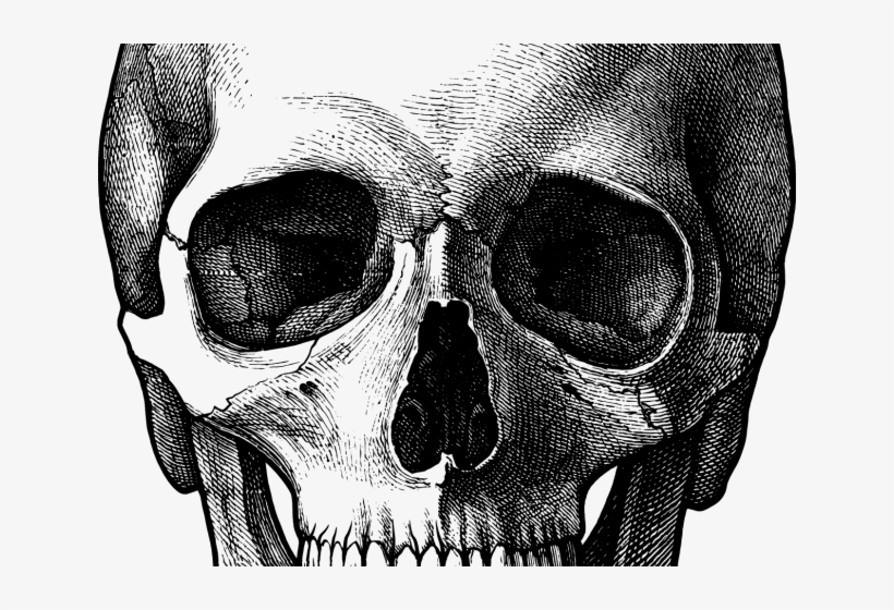 Drawn Skull Face Skull Drawing Transparent Png 640x480 Free