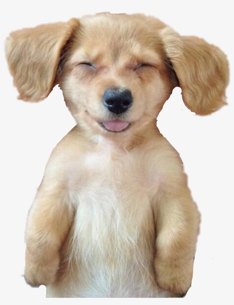 Dog Puppy Sleeping Nap Puppy Cute Smile Dog Transparent Png 1024x1282 Free Download On Nicepng