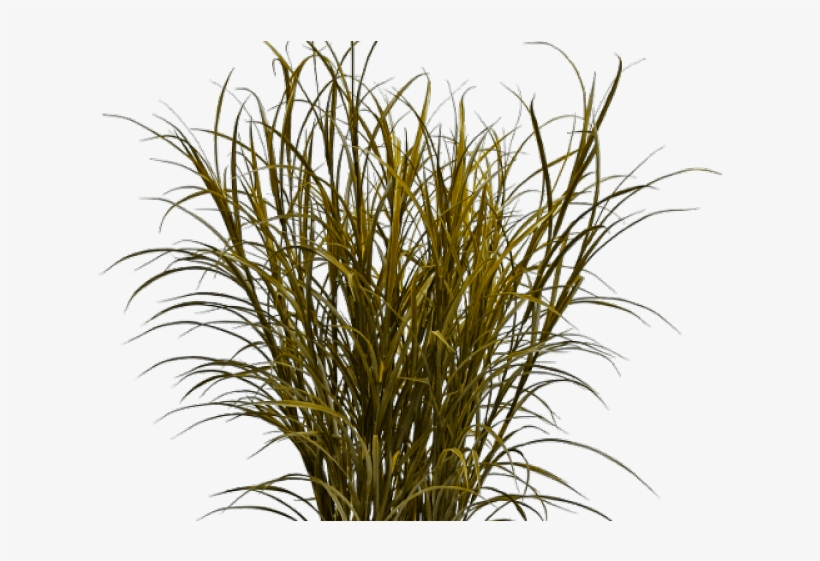 Drawn Weed Grass Background - Dry Grass Texture Png