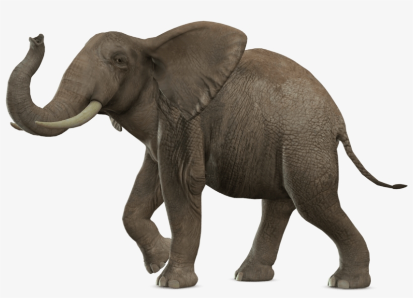 Animals Elephant Png Transparent Png 900x655 Free Download On Nicepng Elephant png images free download. animals elephant png transparent png
