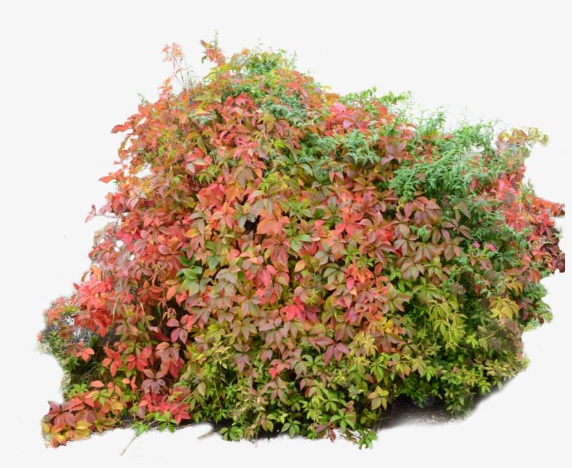 Bush Autumn Fall By - Fall Bushes Png Transparent PNG - 1024x771