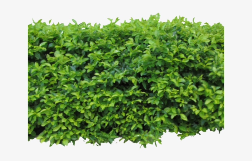 Bush Clipart Texture Bushes Png For Photoshop Transparent Png 640x480 Free Download On Nicepng Bush png cliparts, all these png images has no background, free & unlimited downloads. bush clipart texture bushes png for