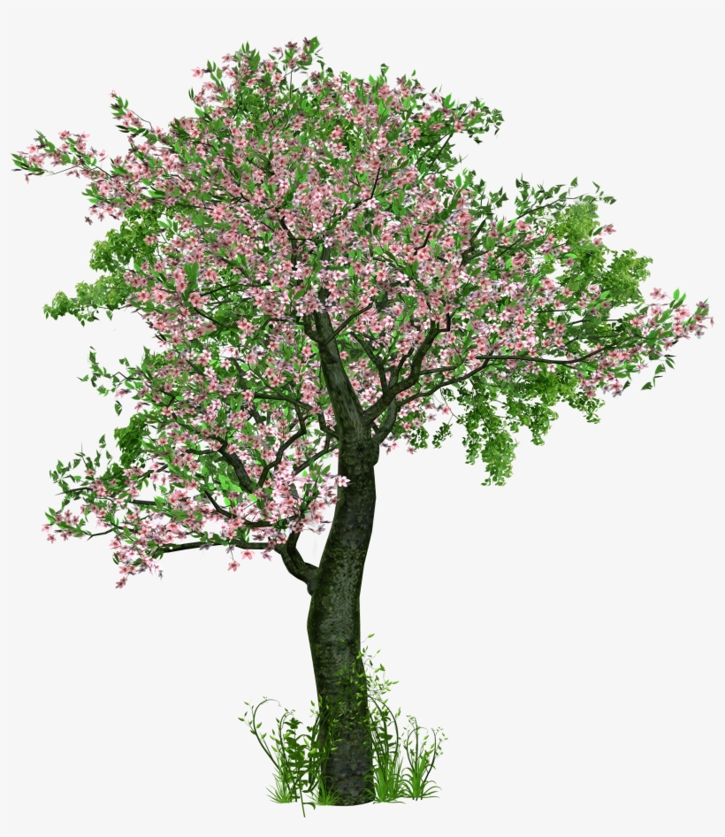 Tree Deciduous Tree Flowers Grass Digital Art Trees With