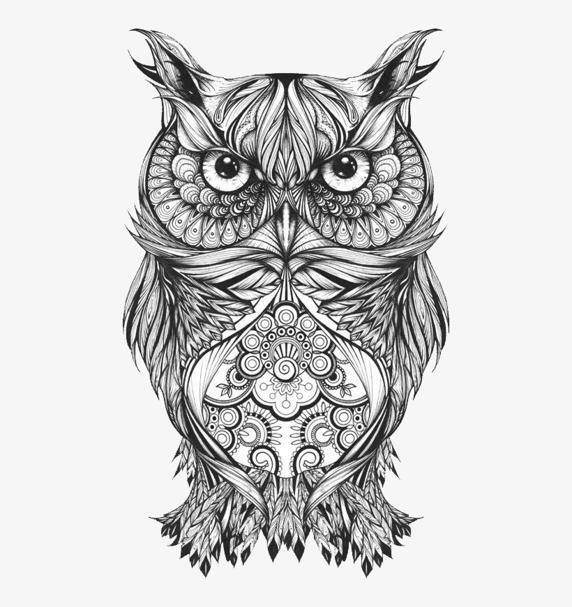Owl Drawing Images