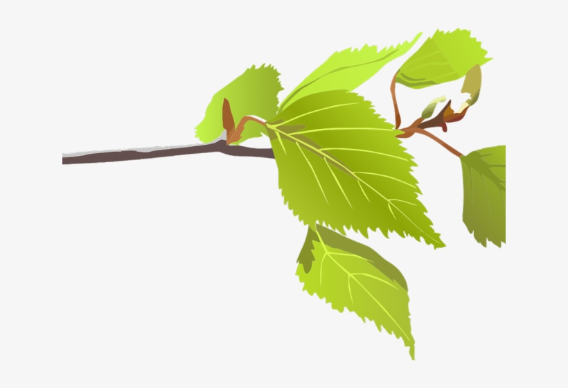 Leaf Clipart Birch Tree Clip Art Transparent Png 640x480 Free Download On Nicepng