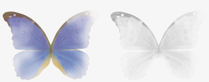 Free Butterfly Magic Wings Photo Overlays, Photoshop - Adobe