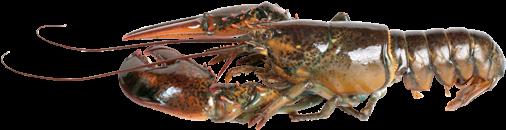 Download Hd Live Lobster Png Lobster Transparent Png Image Nicepng Com