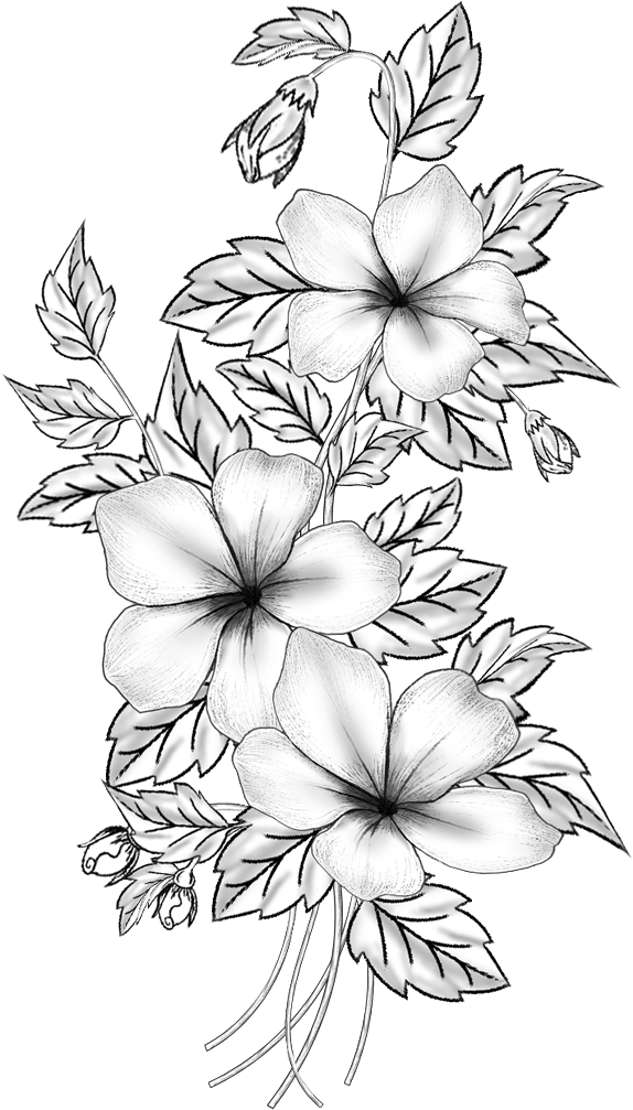 Download Hd Floral Design Cut Flowers Drawing Branch M 02csf Flower Pencil Sketches Png Transparent Png Image Nicepng Com