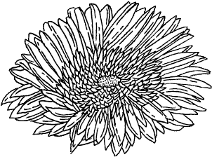 Download Hd Art Drawing Flower Grunge Hipster Indie Sketch Png Png Black And White Flowers Transparent Png Image Nicepng Com