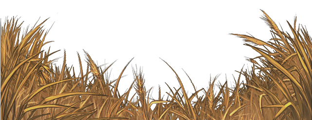 Download Hd Yellow Field Grass Png Transparent Png Image Nicepng Com