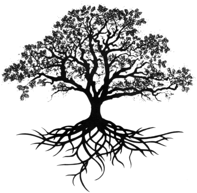 Download Hd Southern Live Oak Sketch Tree With Long Roots Transparent Png Image Nicepng Com