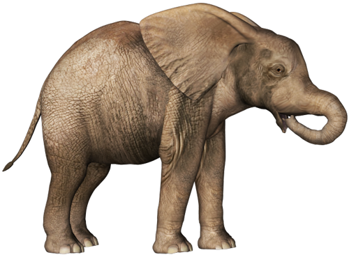 Download Hd Best Free Elephants High Quality Png Baby Elephant No Background Transparent Png Image Nicepng Com Cyclotis), and the asian elephant (elephas maximus). baby elephant no background transparent