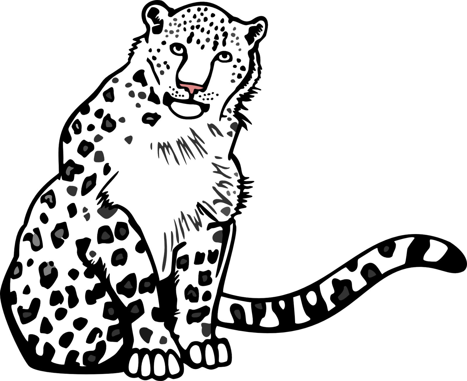 Download Hd Black And White Stock Collection Of Drawing Outline Snow Leopard Vector Png Transparent Png Image Nicepng Com