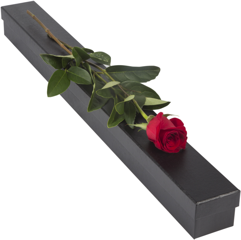 Single Red Rose Flowers Png - garden design ideas