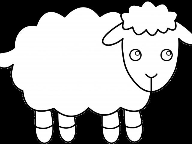 Download Hd Cartoon Sheep Clipart تلوين خروف العيد Png
