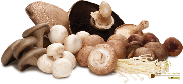 Download Hd Protein Content Of Mushrooms Cogumelos Png Transparent Png Image Nicepng Com