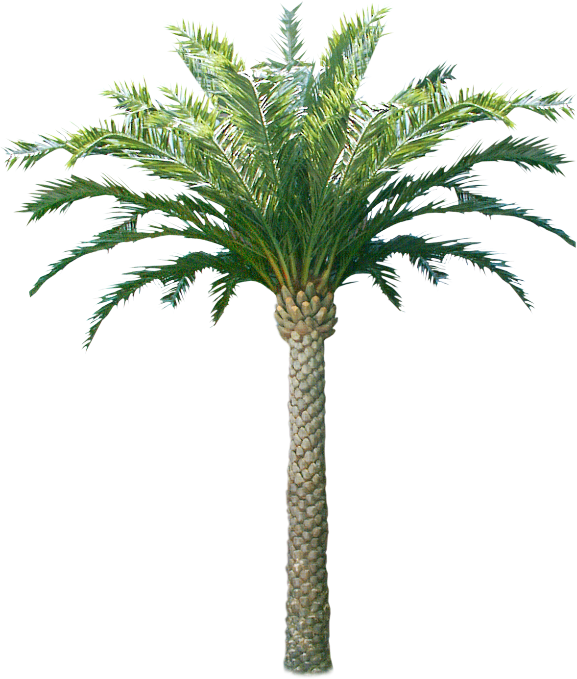 Download HD Palm & Coconut Trees Texture 3d Coconut Tree ...