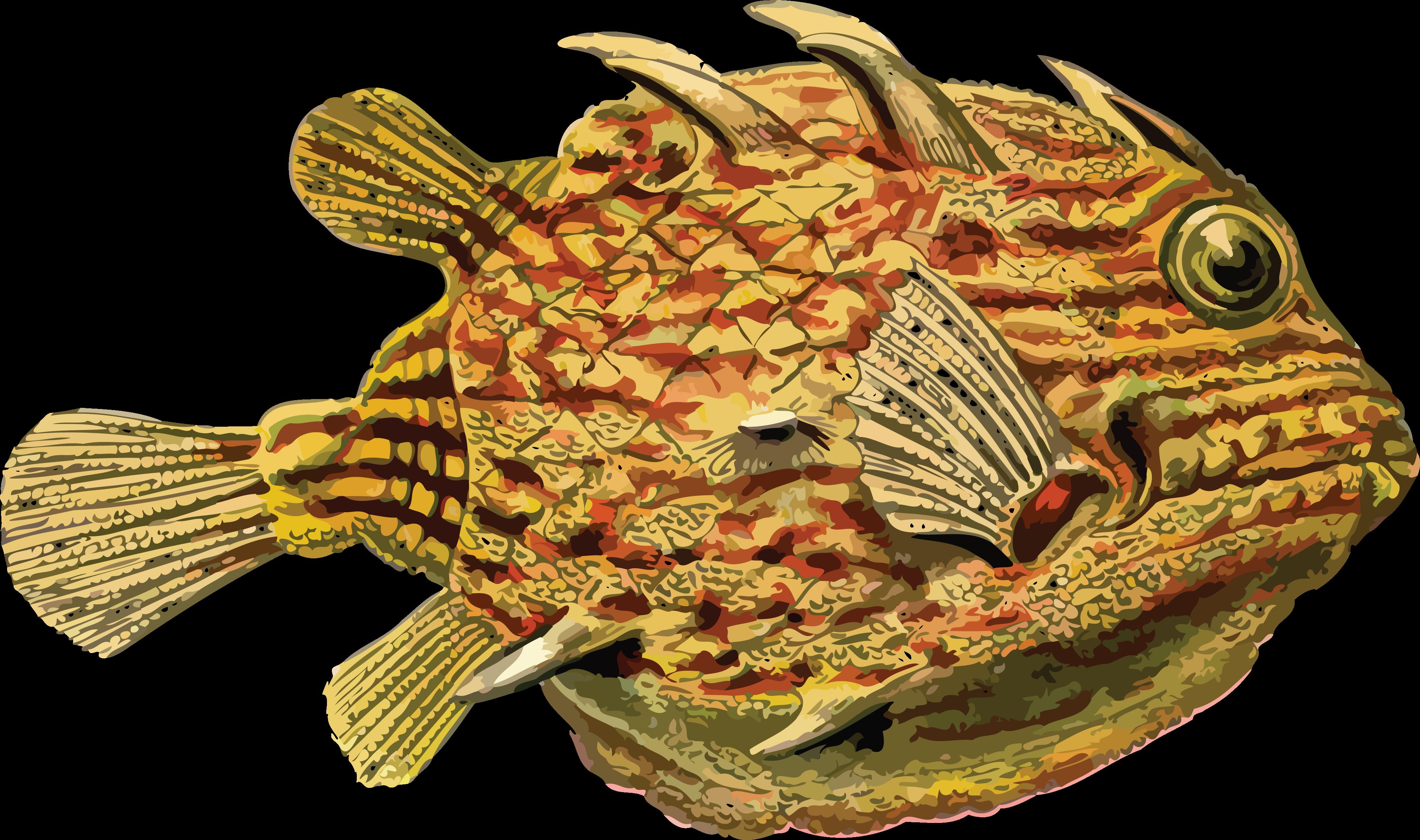 Download Hd Contoh Gambar Dekoratif Hewan Seperti Ikan