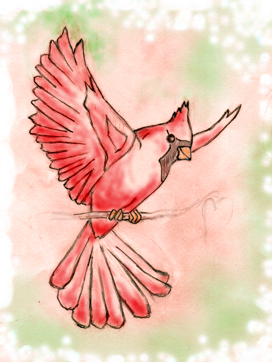 Download Hd Clip Art Flying Cardinal Clipart Sketch Of A Cardinal Transparent Png Image Nicepng Com