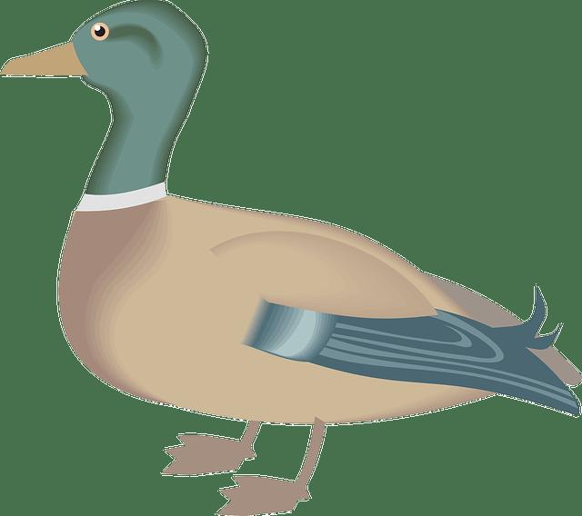 602 6029368 gambar hewan animasi bebek
