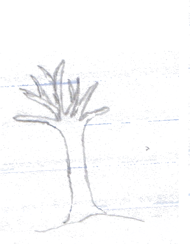 Download Hd Your Virtual Tree Sketch Transparent Png Image Nicepng Com